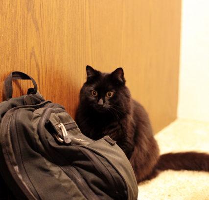 学校に行きたい。