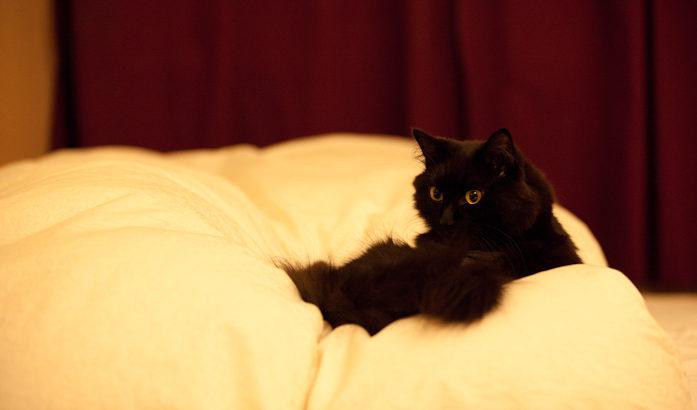 ティーちゃんの、寝床で突き!