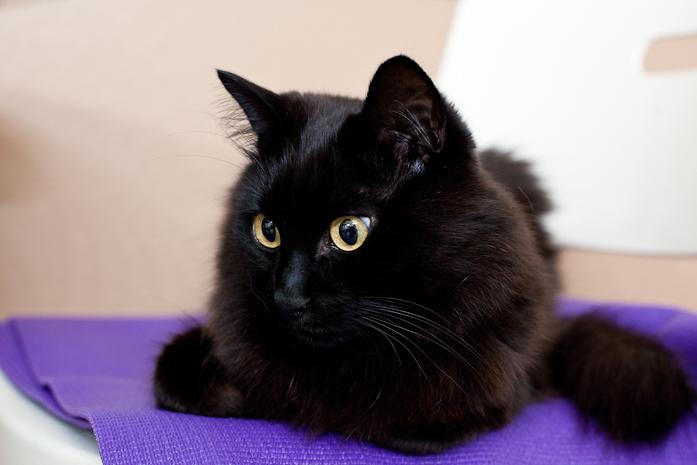 猫 ねこ ブログ 写真 画像 かわいい ペット おもしろ 萌え しゃべる猫 しゃべるねこ しおちゃん