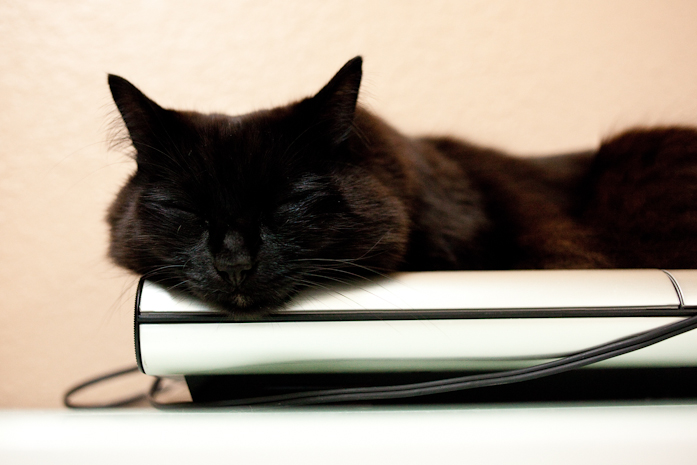 しおちゃんBOSEのオーディオの上でお昼寝。