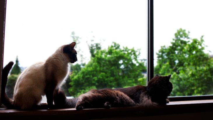 ふたりの見る方向。