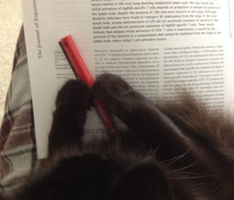 赤ペン大好き