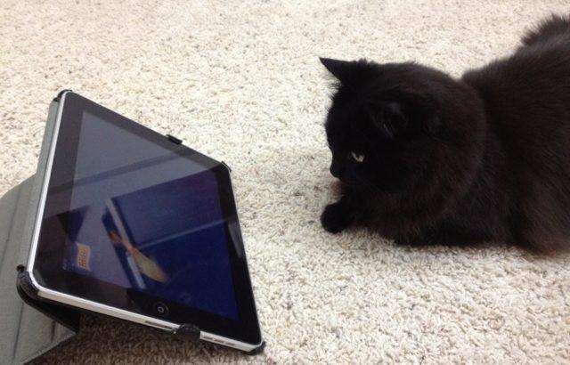 iPadでしおちゃんが
