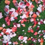 ラボの前の通りの紅葉