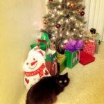 クリスマス間近