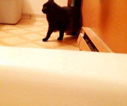 お風呂のぞきしおちゃん
