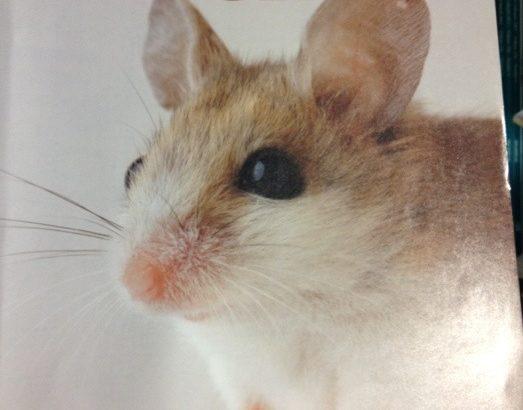 キュインマウス