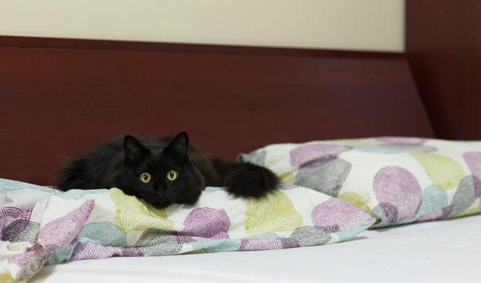 予約が難しいネコド(寝床)
