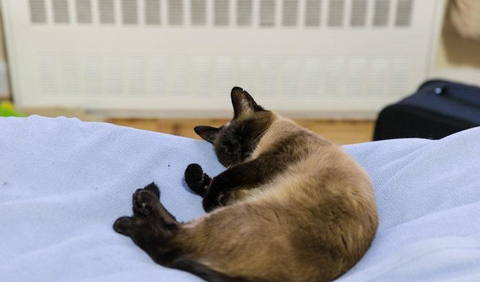 三種の寝方
