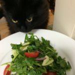 ウォータークレスのサラダ