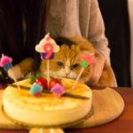 誕生日Wフィーバー