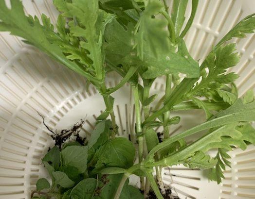 収穫した野菜で朝ごはん