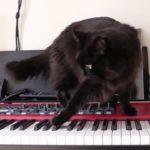 しおちゃんのピアノ演奏