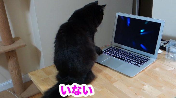 しおちゃんパソコンを使う?