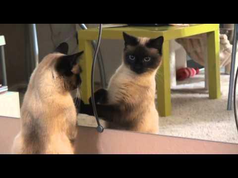 ティーちゃん、鏡が気になる。