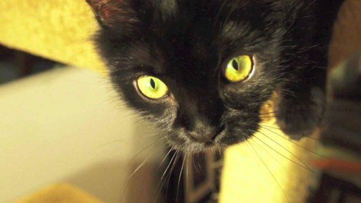 黒猫はすんばらしいビデオ