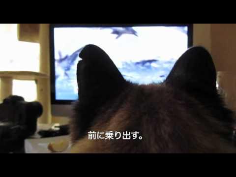 ティーちゃんの、動物系テレビ番組