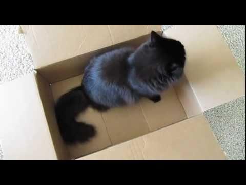 しおちゃんの、箱には慎重に入る