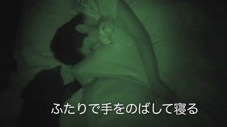 しおちゃん、しんコロの寝入りを襲う