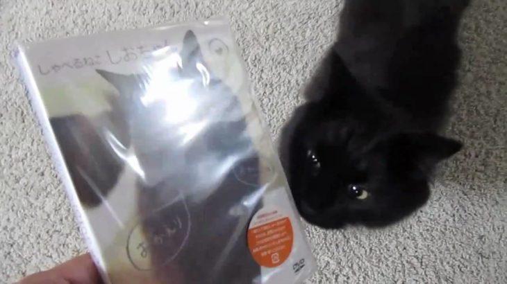 しおちゃんの、DVDを「みる」