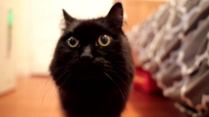 最近ティっ子の匂いが変わったのは何故?