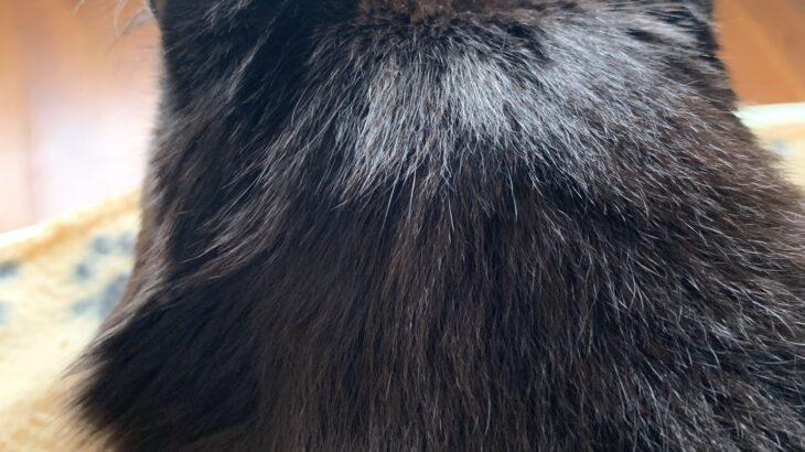 しおちゃんの「裏ほほ毛」
