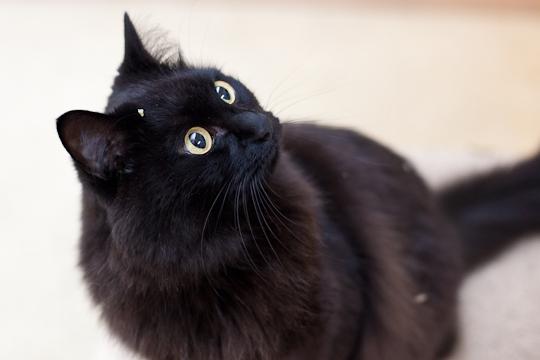 しおちゃん、猫ブログ風。