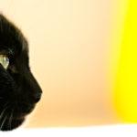 猫崇拝の歴史もわからなくもない。