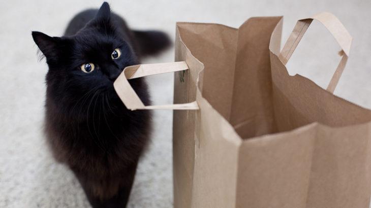紙袋は入るものじゃない、うまのりになるものだ!