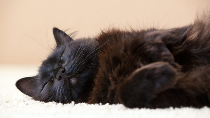 幸せなお昼寝、でもティーちゃんは格闘技の夢を見ている。