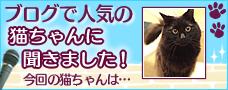 「ブログで人気の猫ちゃんに聞きました!」に出演。